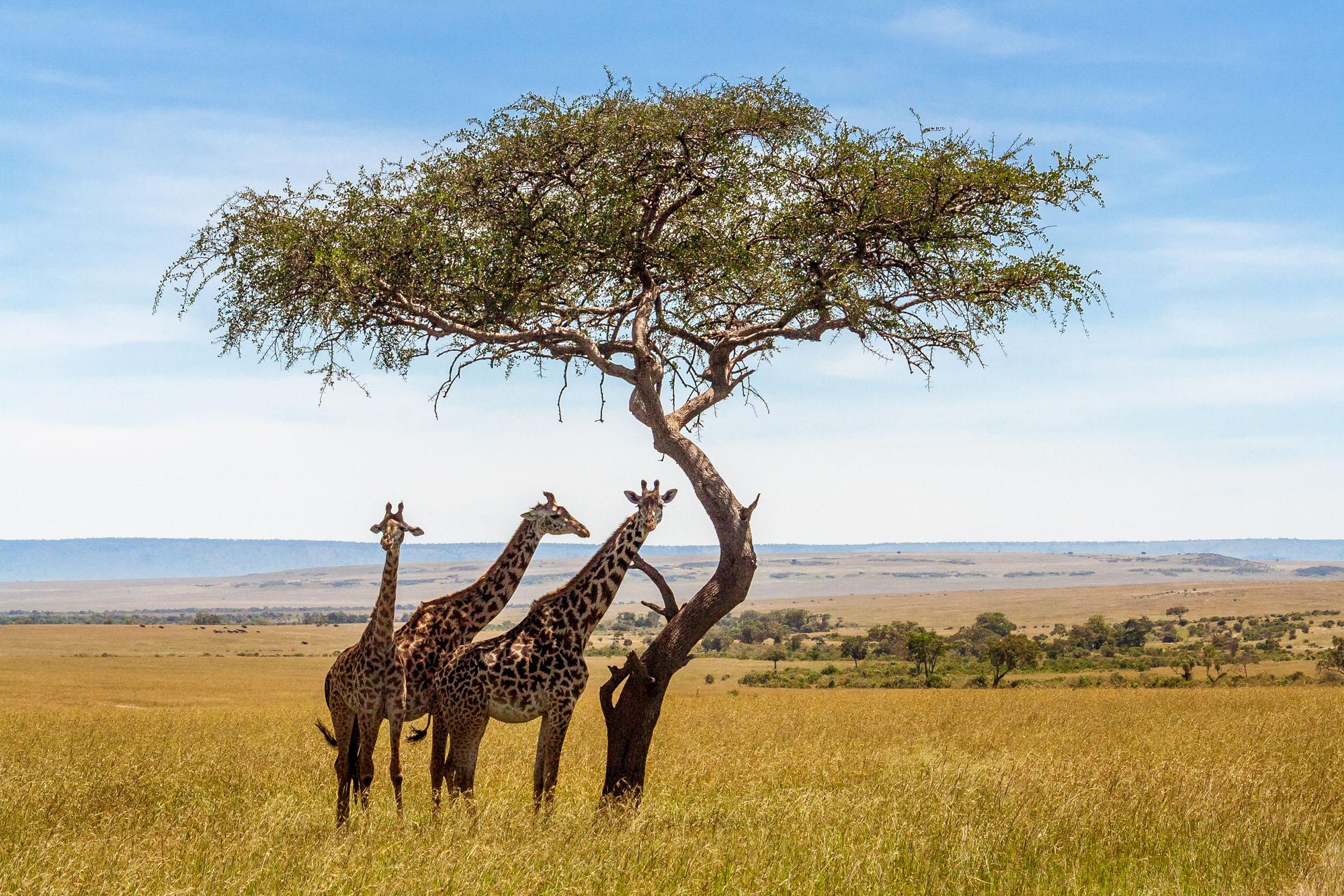 Jagtrejse Nambia