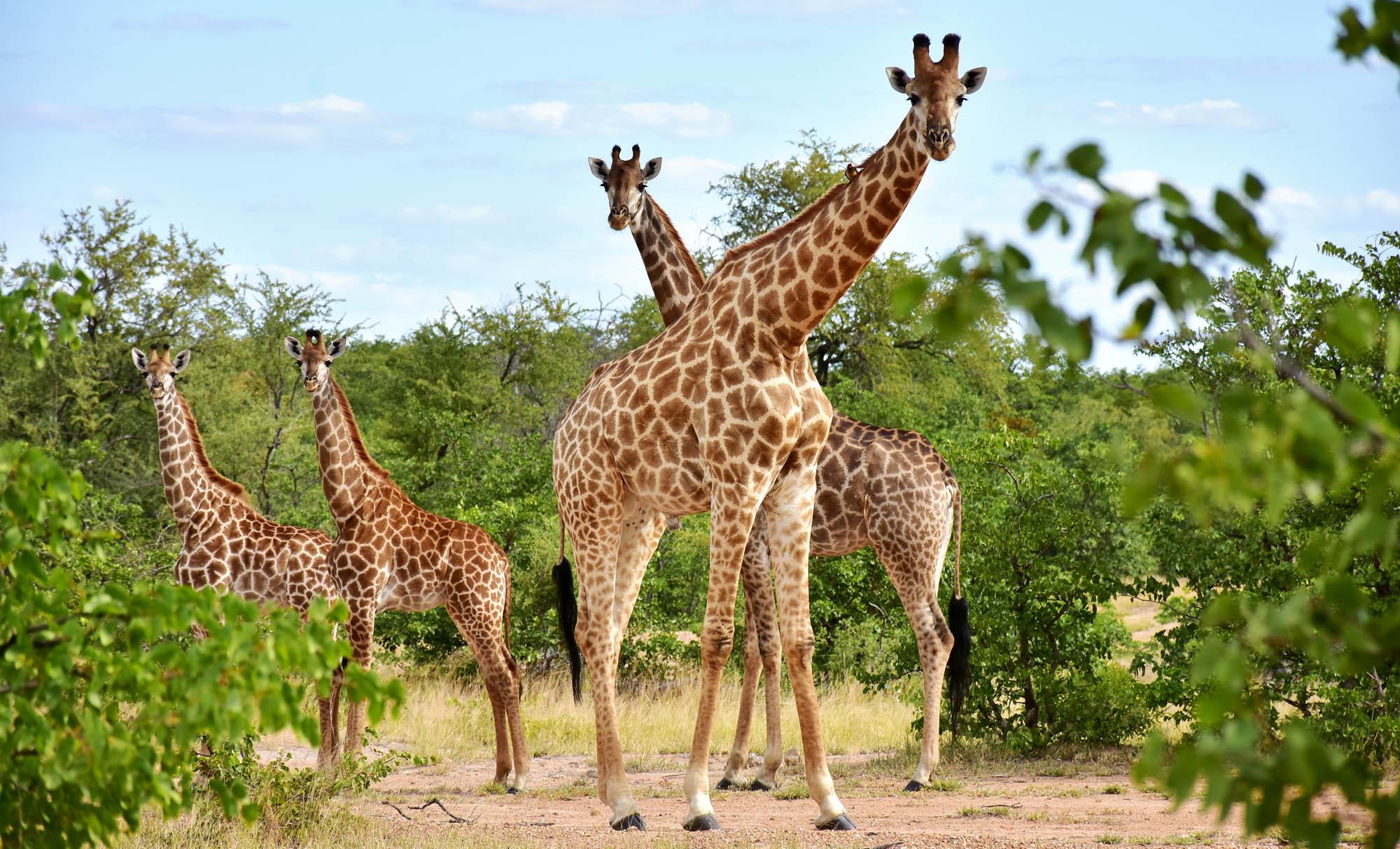 Jagtrejse Sydafrika
