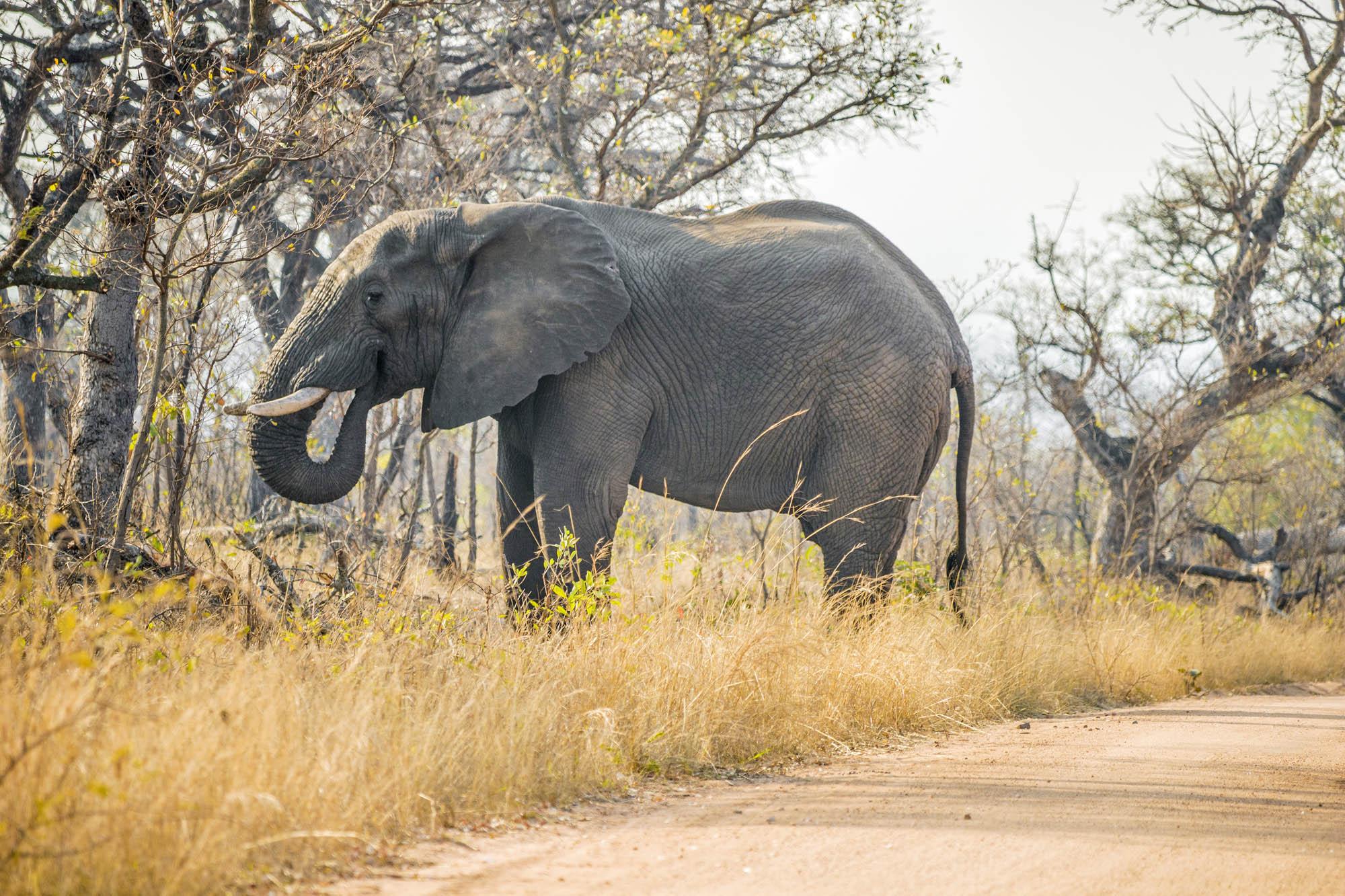 Jagtrejse Zimbabwe