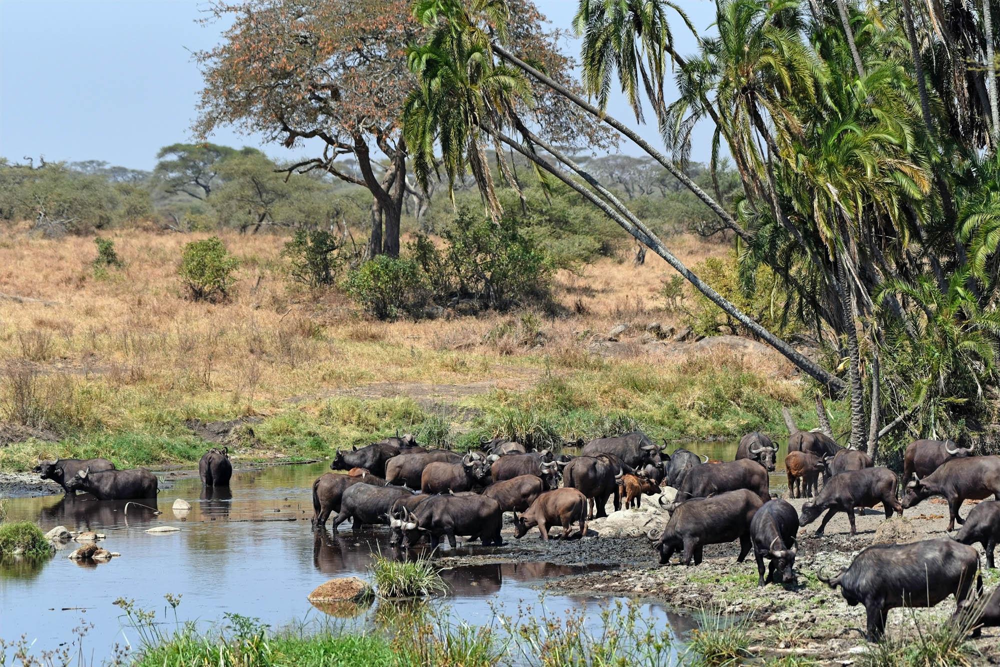 Jagtrejse Mozambique